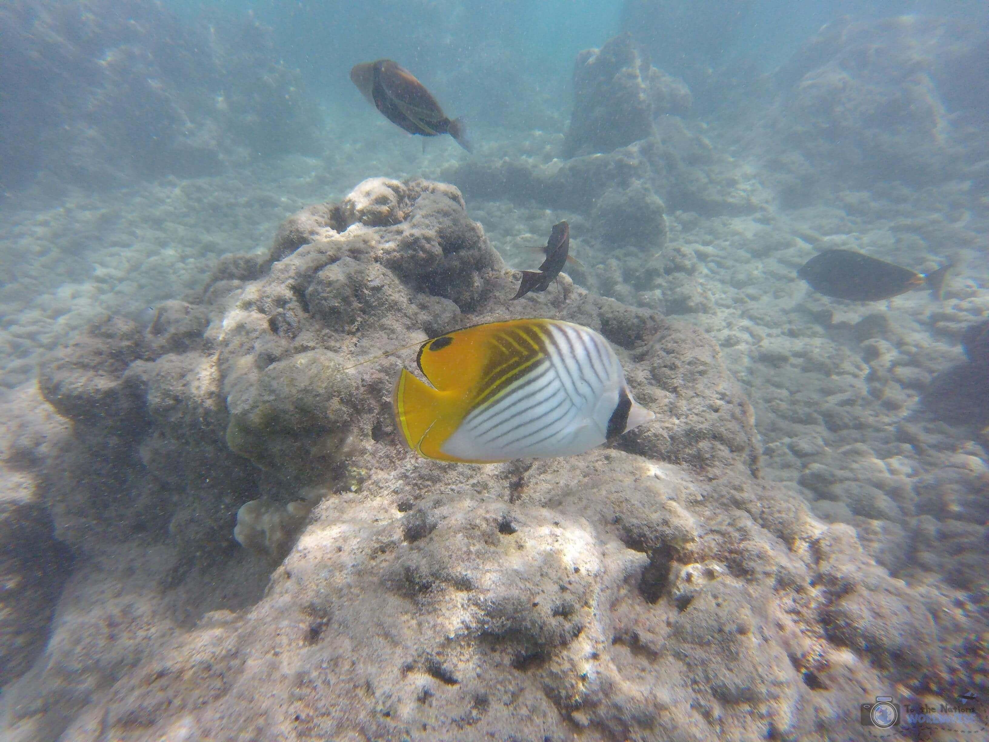 Snorkeling Hanauma Bay Nature Preserve