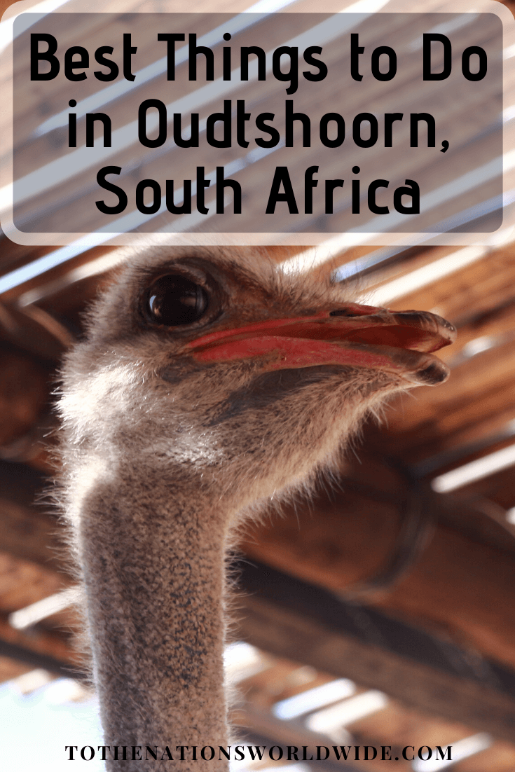 Best Things to Do in Oudtshoorn, South Africa